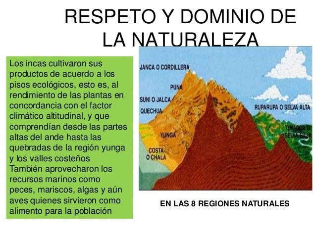 TÉCNICAS AGRÍCOLASAndenes Sistema degraderias que los incasconstruyeron en las faldasde los cerros paraGanar tierras de cu...