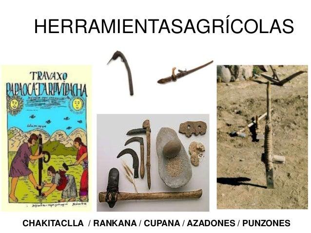 Las mujeres utilizaban la raucana pararomper terrones de tierra o para enterrar lassemillas