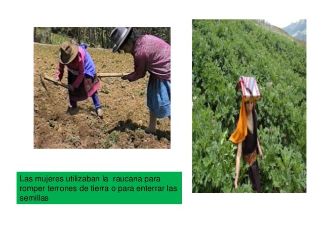 DIVISIÓN DE LAS TIERRASTIERRAS DEL PUEBLOTIERRAS DEL INCA TIERRAS DEL SOLEran las tierras queestaban destinadaspara la man...