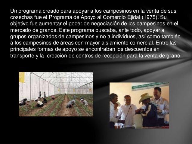 Un programa creado para apoyar a los campesinos en la venta de sus cosechas fue el Programa de Apoyo al Comercio Ejidal (1...