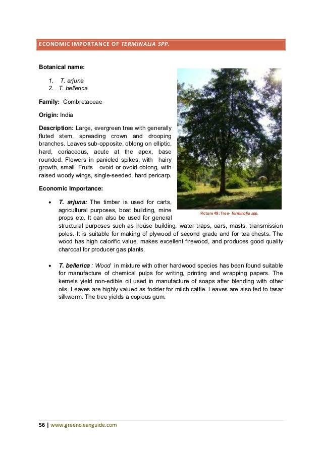 Economic Importance Of Popular Tree Species