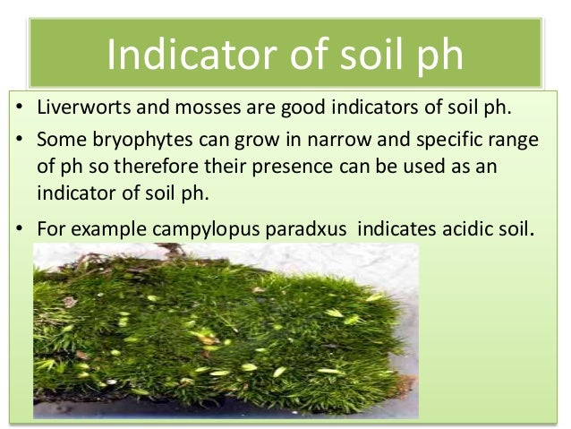 Economical importance of bryophytes for Soil uses and its importance
