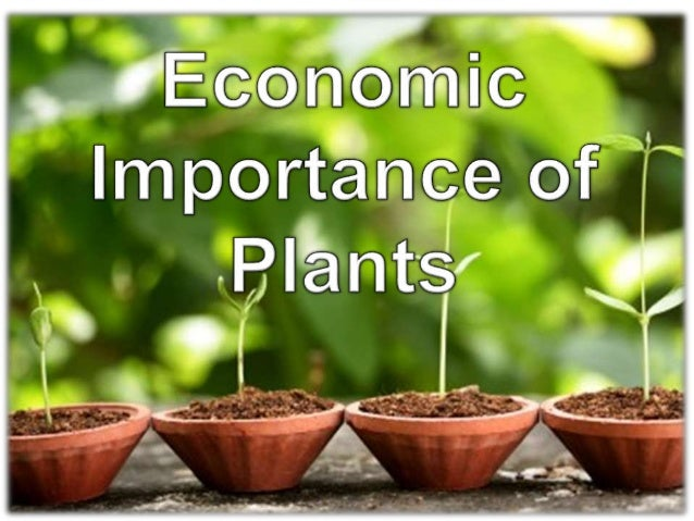 How or What makes the Plants important?