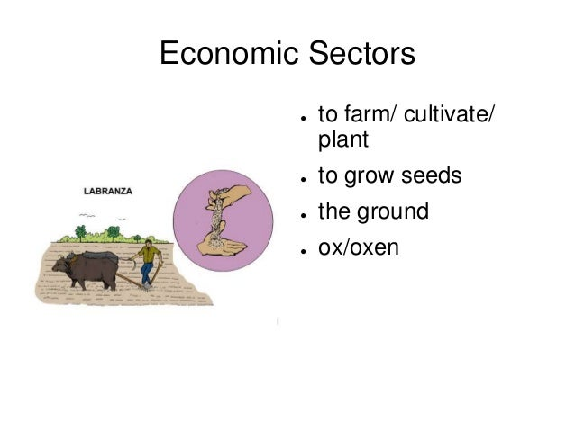 Economic Sectors ● to farm/ cultivate/ plant ● to grow seeds ● the ground ● ox/oxen