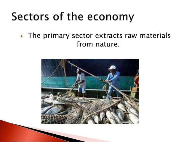  The primary sector extracts raw materials from nature.