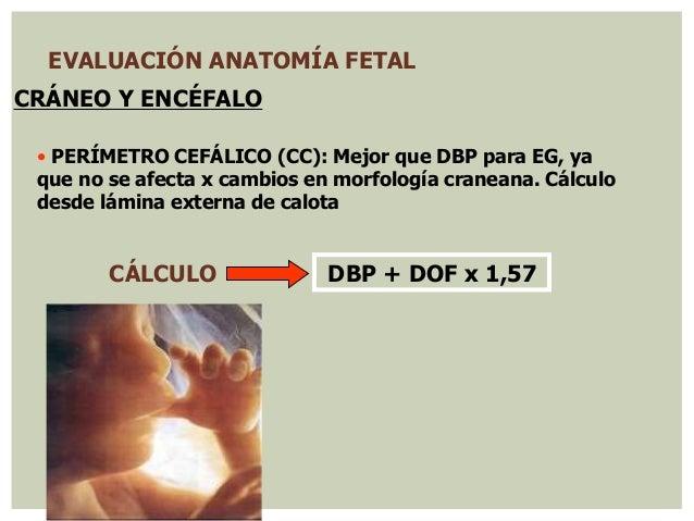 Ecografia obstetrica normal 2014 chile
