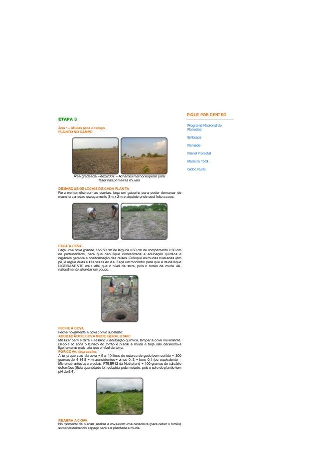 23/05/2015 Ecoreforest==Etapa3==GuanandieMognoAfricano http://www.ecoreforest.com.br/pagina/hometp3.htm 1/3 ETAPA ...