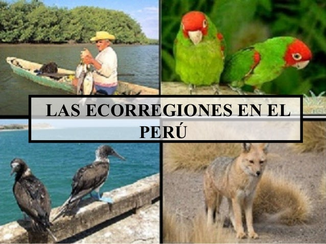 LAS ECORREGIONES EN EL PERÚ
