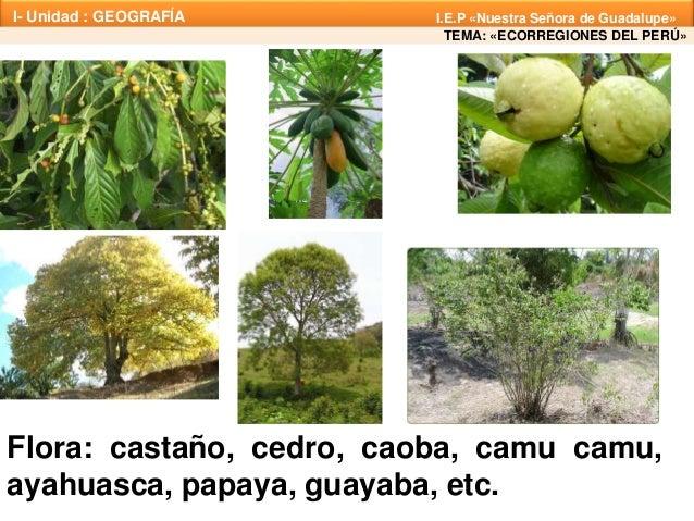 Flora Y Fauna Del Perú: Ecorregiones 2