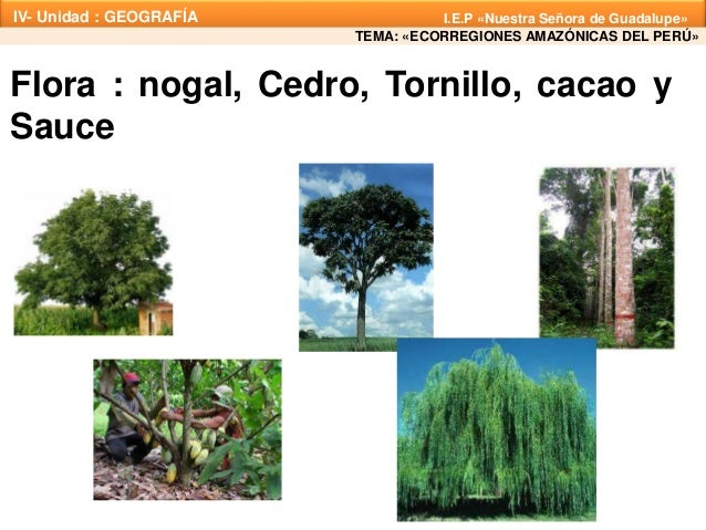 Plantas De Selva Alta: Ecorregiones Amazónicas Del Perú