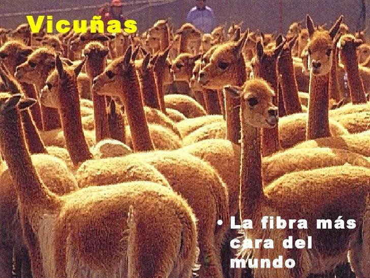 Ecorregiones parte iii for Terrazas 14 vicuna