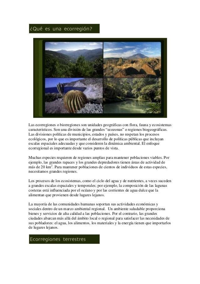 Las ecorregiones o biorregiones son unidades geográficas con flora, fauna y ecosistemas característicos. Son una división ...