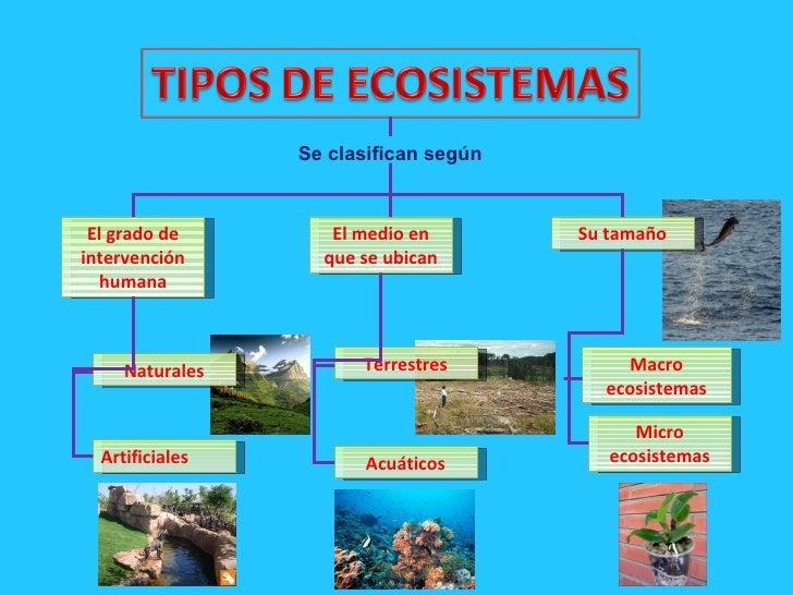 Ecología Niveles De Organización Según La Ecología