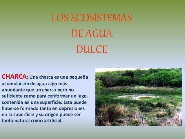 LOS ECOSISTEMAS DE AGUA DULCE CHARCA: Una charca es una pequeña acumulación de agua algo más abundante que un charco pero ...