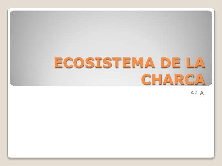 ECOSISTEMA DE LA         CHARCA              4º A