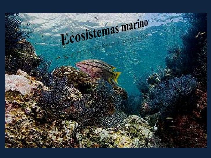 Ecosistemas marino <br />