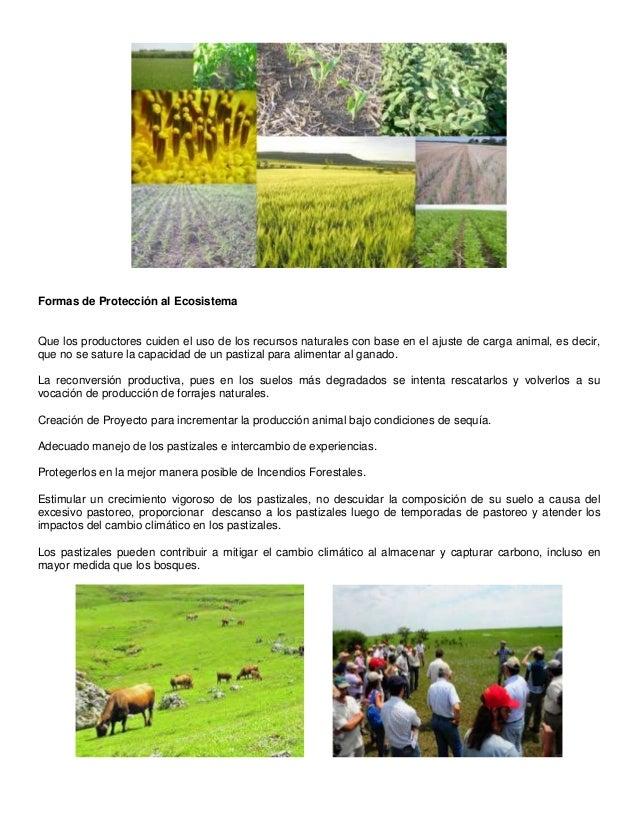 K Es Un Bisonte Ecosistema Pastizal