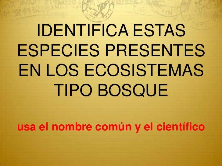 IDENTIFICA ESTAS ESPECIES PRESENTES EN LOS ECOSISTEMAS TIPO BOSQUEusa el nombre común y el científico<br />