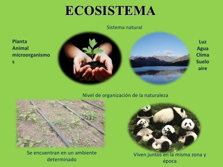 ECOSISTEMA Sistema natural Planta Animal microorganismos Luz Agua Clima Suelo aire Nivel de organización de la naturaleza ...