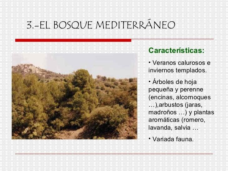 Ecosistemas for Arboles de hoja perenne para clima frio