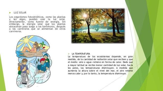 Ecosistemas y factores que influyen en un ecosistema - Como solar un suelo ...
