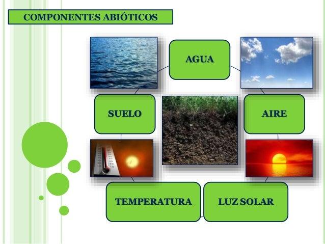 Ecosistemas biologia de segundo a o profesora lourdes for Que elementos conforman el suelo