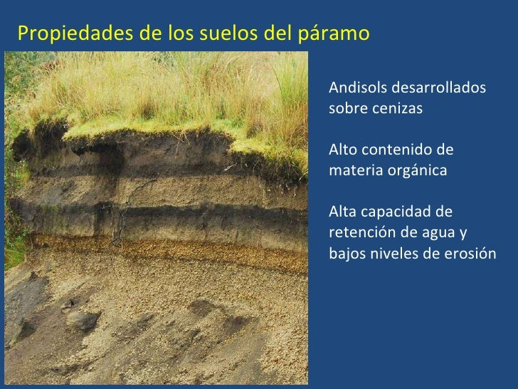 Ecosistemas acuaticos andes tropicales for Caracteristicas de los suelos