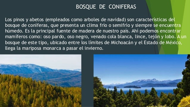 Ecosistemas de mex for Los arboles y sus caracteristicas