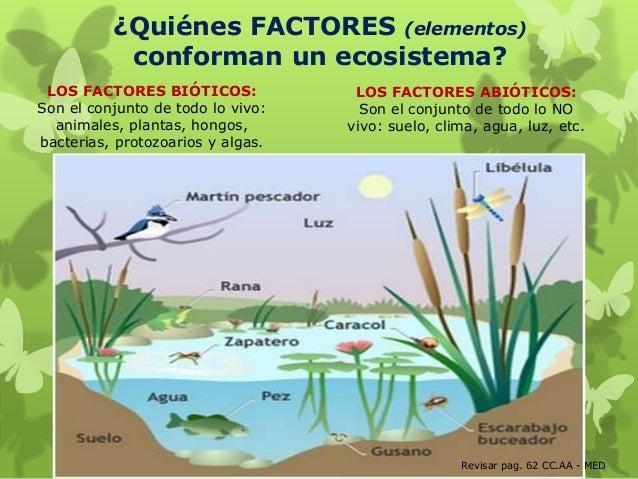 Ecosistemas 5 2014 parte 1 for Que elementos conforman el suelo