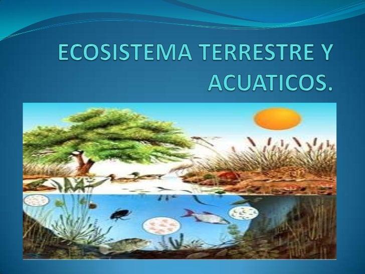 Ecosistema terrestre y acuticos