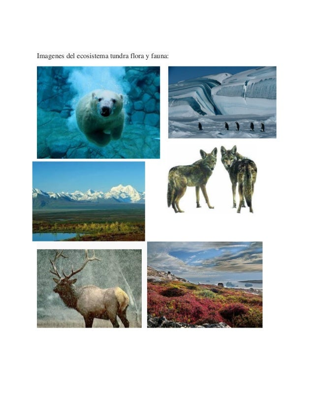500 essay about the tundra biome