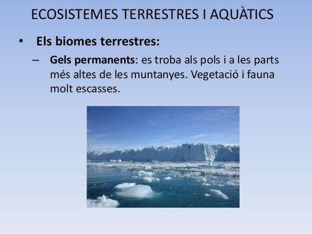 Ecosistemes terrestres