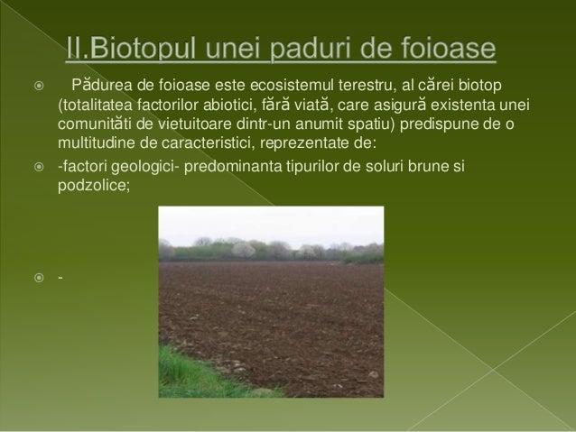 Ecosistemul Paduri Foioase 638 Cb Structura Plante