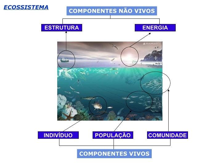 ECOSSISTEMA ENERGIA ESTRUTURA COMUNIDADE POPULAÇÃO INDIVÍDUO COMPONENTES NÃO VIVOS COMPONENTES VIVOS