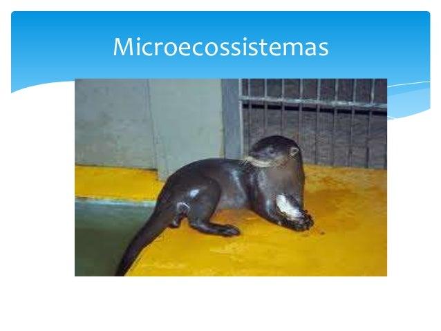 Microecossistemas