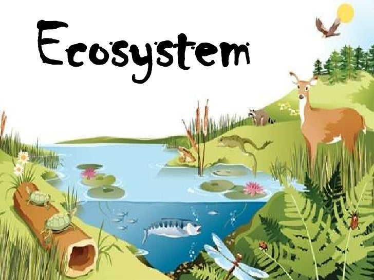 ecosystem | Definition, Components, & Structure | Britannica.com