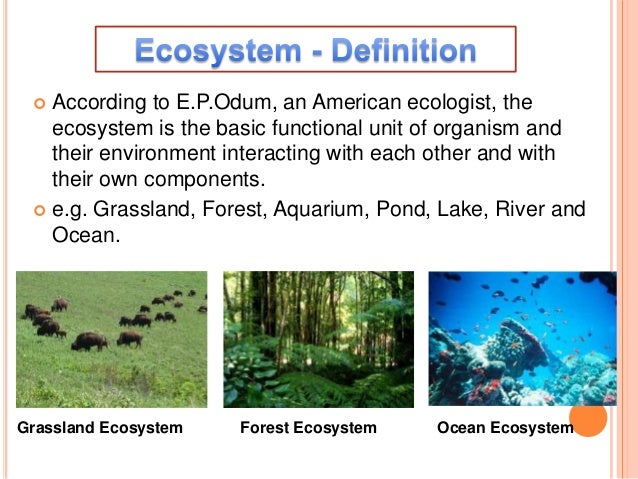Ecosystem:Structure and Function  Slide 3