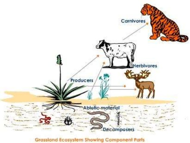 interaction of plants and animals pdf