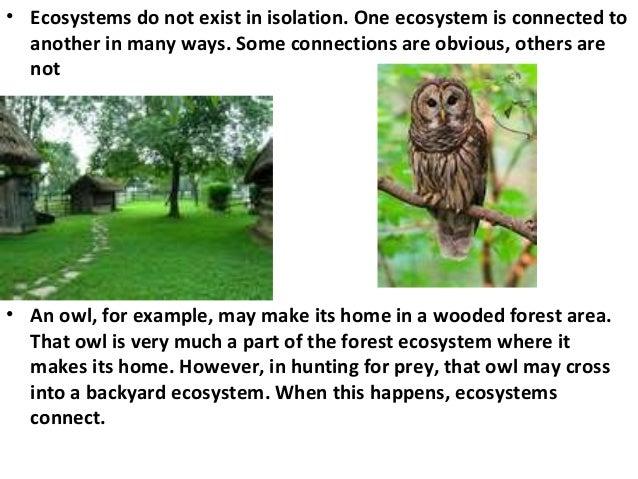 Ecosystem (Described very attractively)