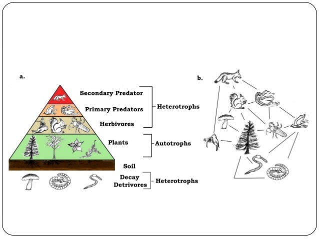 Food Chains and Webs:  If an ecosystem is to be self-sustaining it must contain a flow of energy.  Those life activities...