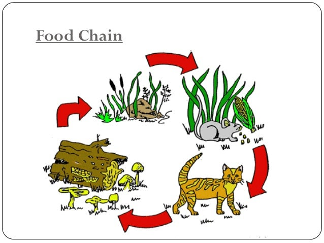 Since practically all organisms may be consumed by more than one species, many interactionsoccur along the food chains of...