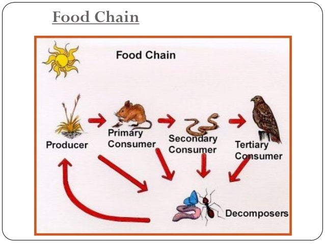 Food Web Interactions:  Producers: (plants) –the energy of the community is derived from the organic compounds in plants -...