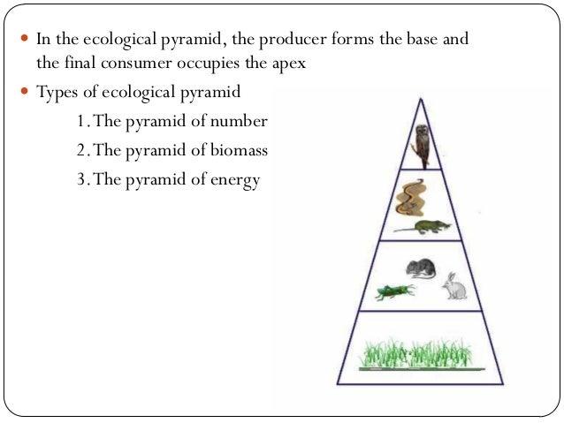 Marine Ecosystem:  It includes saline water ecosystems like oceans, seas, estuaries etc.,  LimnicEcosystem:  It includes...