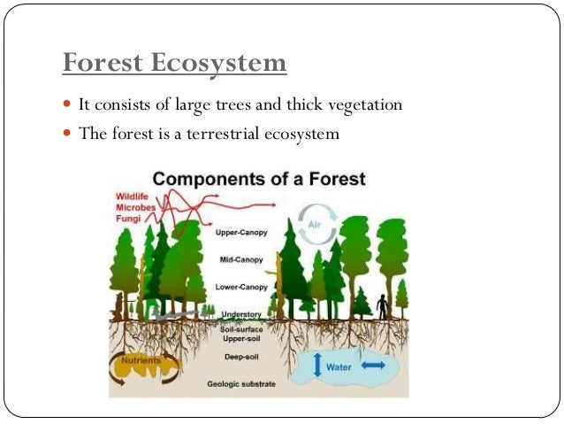 Why should we care about Ecosystem  Ecosystem ecology provides a mechanistic basis for understanding the Earth System  E...