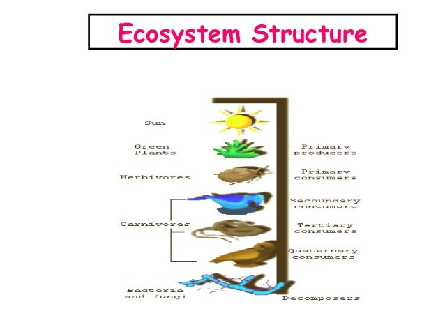 depletion of forests ecological imbalance Why are forests considered bio diversity hotspots what would happen in the ecological imbalance in ecology due to the depletion of natural resources.
