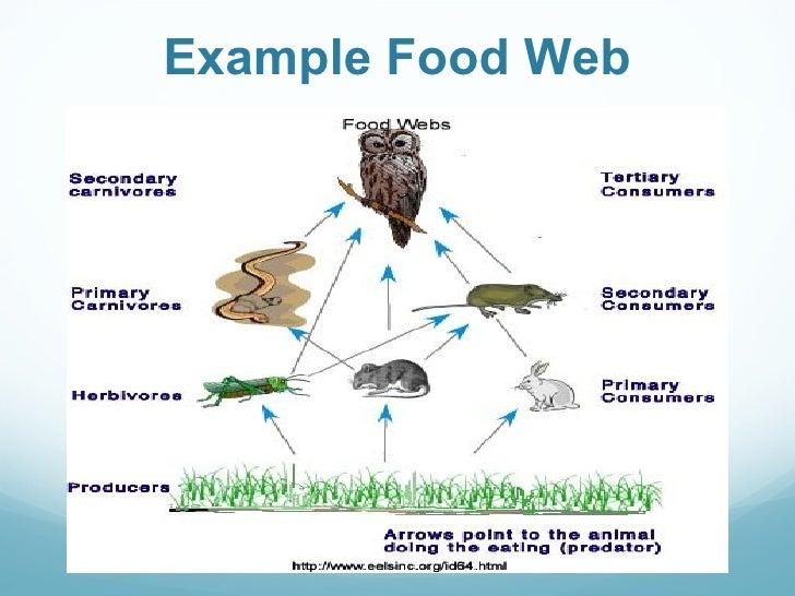 Ecosystem Energy Flow Part 2