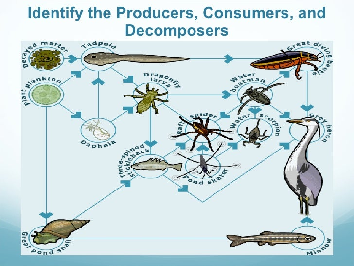 Food Chains Producers, Consumers, and Decomposers Cut and Paste ...