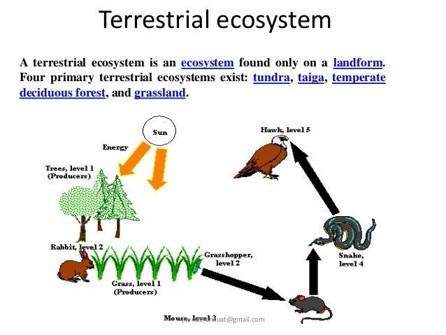 Ecosystem  Jitendra