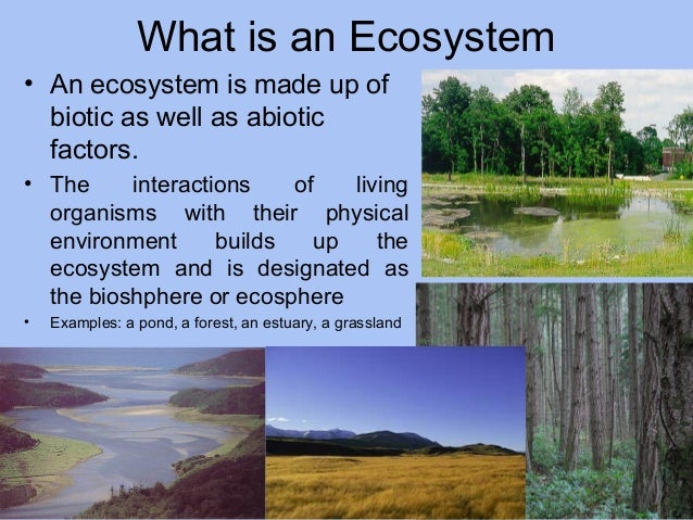 What is an Ecosystem • An ecosystem is made up of biotic as well as abiotic factors. • The interactions of living organism...