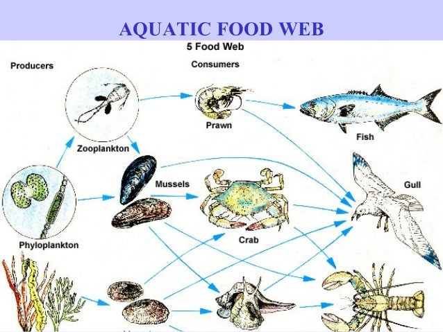 aquatic food web | Foo...